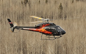 Picture forest, flight, easy, helicopter, Eurocopter, AS355 NP