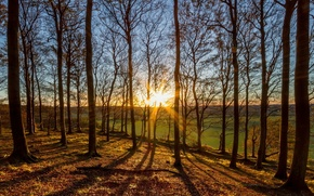 Picture forest, the sun, trees, nature