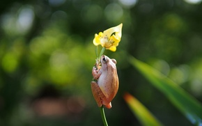 Picture flower, yellow, frog, iris, wood, black