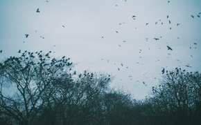 Picture sadness, the sky, birds, mood, frowning