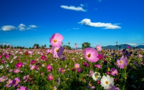 Picture clouds, flowers, mountains, field of flowers, blue sky