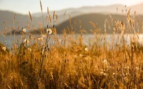 Picture summer, grass, Sunny, Summer Bliss