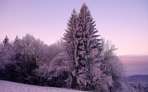 Wallpaper spruce, snow, cold, nature, winter, frost, trees, tree, ate, hills, the sky