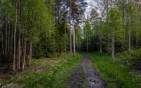 Picture greens, trees, green, Forest, forest, grove, path, trees, path