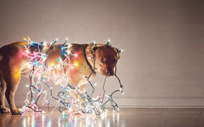 Picture holiday, dog, garland, light bulb