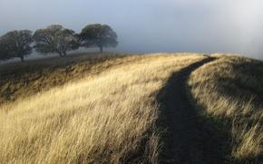 Wallpaper dry, path, Hill, fog, trees, grass