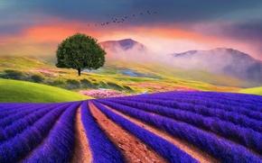 Picture landscape, mountains, birds, fog, tree, vegetation, field