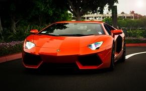 Picture trees, orange, reflection, lamborghini, the front, orange, headlights, aventador, lp700-4, Lamborghini, aventador