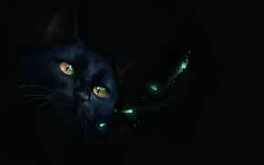 Picture lights, black cat, by SalamanDra-S