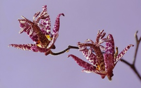 Wallpaper flower, nature, plant, petals, exotic