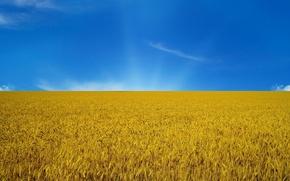 Picture the sky, flag, Ukraine, flag
