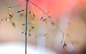 Wallpaper macro, glare, drop, stem, rostenie