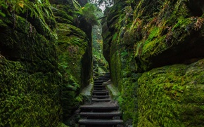 Wallpaper stones, Germany, National Park Saxon Switzerland, stage, moss