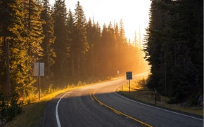 Picture road, forest, the sun, rays, light, trees, the way, markup, turn, ate, roadside, road, meet