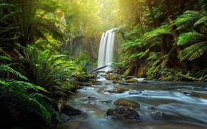 Picture forest, river, waterfall, Australia, fern, Australia, Victoria, The Otways, Aire River, Great Otway National Park, ...