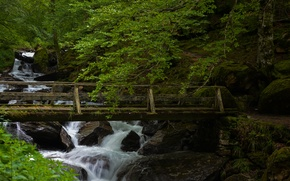 Picture forest, bridge, river, stones, France, France