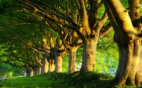 Picture road, greens, summer, grass, trees, freshness, nature, tree, spring, morning, forest