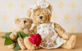 Picture flower, toys, rose, bears, Teddy bears
