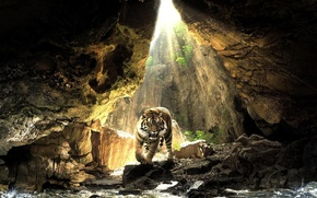 Wallpaper water, the sun, tiger, stones
