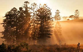 Picture light, nature, morning