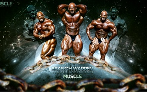 Picture muscle, BODYBUILDING, IFBB, BRANCH WARREN, PRO, BODYBUILDER
