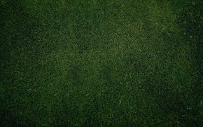 Picture greens, grass, lawn, Wallpaper, texture, Green