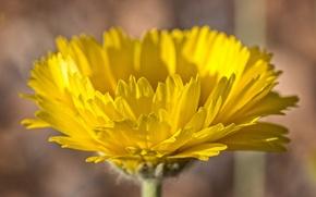 Picture flower, paint, plant, petals