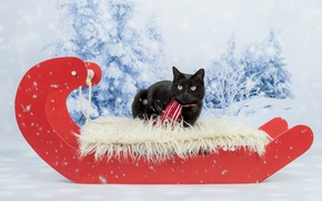 Picture winter, cat, cat, look, snow, red, background, black, new year, Christmas, ate, scarf, lies, fur, …