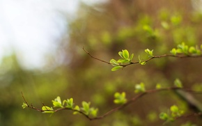 Picture greens, the sky, light, spring, blur, bokeh, twigs, young leaves