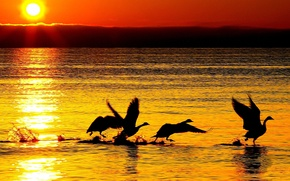 Picture sea, wave, water, the sun, sunset, nature, reflection, river, background, Wallpaper, wallpaper, swans, silhouettes, widescreen, …