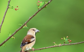 Picture branches, bird, beak