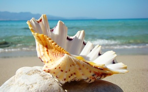 Picture sea, beach, stay, shell