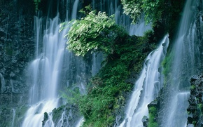 Picture Waterfall, Japan, The bushes