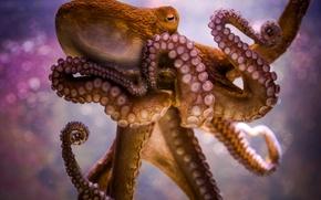 Picture octopus, tentacles, sucker