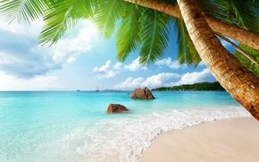 Wallpaper sand, sea, beach, the sun, tropics, palm trees, the ocean, shore, island, summer, beach, sea, ...