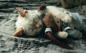 Picture kitty, toy, sleeping, by LadyWilmor