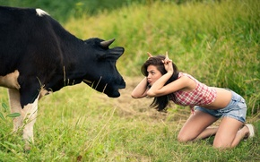 Wallpaper tomfoolery, cow, girl, meadow