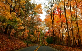 Picture road, autumn, forest, trees, Park, lights