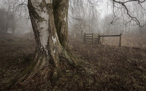 Picture the fence, birch, dry leaves