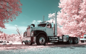 Picture trees, flowers, tractor, Mack, B61