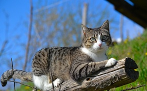 Picture cat, cat, nature, branch, log