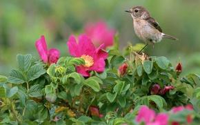 Wallpaper Flowers, Bird, Leaves
