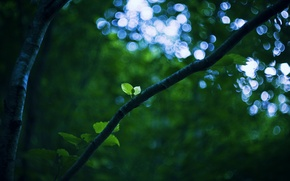 Picture branch, sheet, light, the sky, green, nature, branch, leaves, bokeh, tree, foliage, greens, trunk, green, ...