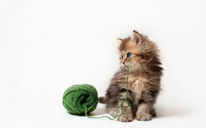 Picture cat, tangle, kitty, the game, white background, thread, Daisy, Ben Torode