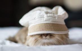 Picture cat, Panama, lying, Daisy, Ben Torode, hid, Benjamin Torode