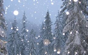 Picture winter, snow, tree, Trees