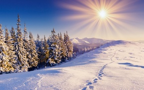 Wallpaper snow, mountains, winter, the sun, the sky, forest, traces