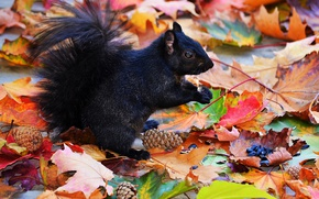 Picture autumn, leaves, protein, black, seeds, bumps