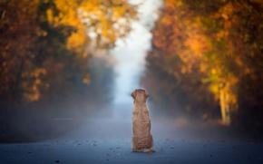 Wallpaper fog, road, dog