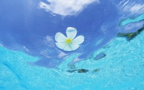 Wallpaper Flower, The Maldives, Water